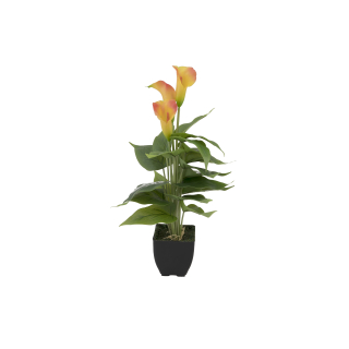 EUROPALMS Calla mini, Kunstpflanze, gelb orange, 43cm